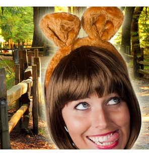 Brown bear ears