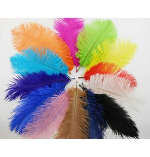 Plume/feather ostrich colored 50 cm